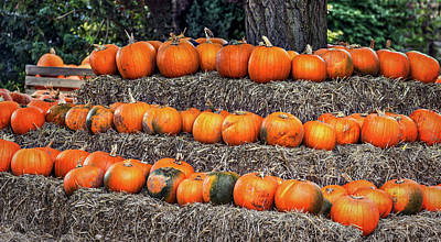 Pumpkin Time. Art Print by Angela Aird