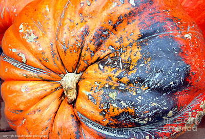 Photograph - Pumpkin Time.. by Mia Alexander