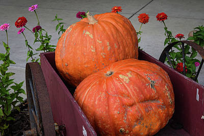 Photograph - Pumpkin Wagon And Dahlias by Tom Cochran