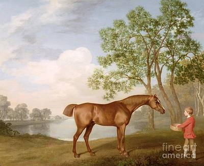 Chestnut Painting - Pumpkin With A Stable-lad by George Stubbs