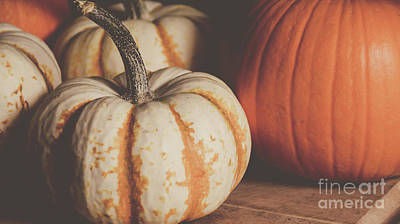 Photograph - Pumpkins 11 by Andrea Anderegg