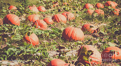 Photograph - Pumpkins 12 by Andrea Anderegg