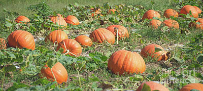 Photograph - Pumpkins 13 by Andrea Anderegg