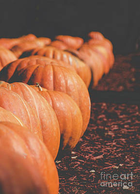 Photograph - Pumpkins 14 by Andrea Anderegg