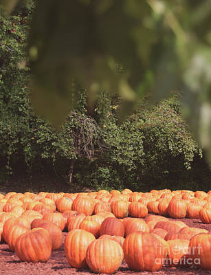 Photograph - Pumpkins 16 by Andrea Anderegg