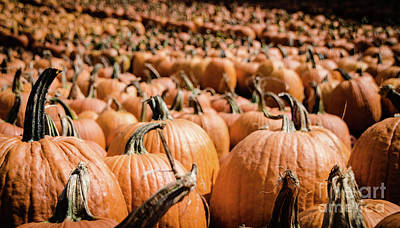 Photograph - Pumpkins 18 by Andrea Anderegg