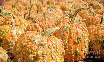 Photograph - Pumpkins 19 by Andrea Anderegg