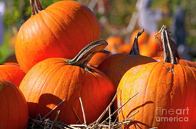 Photograph - Pumpkins 2 by Sharon Talson