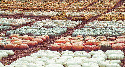 Photograph - Pumpkins 21 by Andrea Anderegg