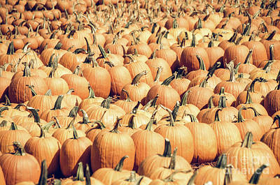 Photograph - Pumpkins 22 by Andrea Anderegg