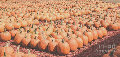 Photograph - Pumpkins 24 by Andrea Anderegg