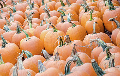 Photograph - Pumpkins 25 by Andrea Anderegg