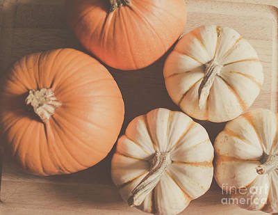 Photograph - Pumpkins 4 by Andrea Anderegg