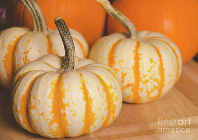 Photograph - Pumpkins 7 by Andrea Anderegg