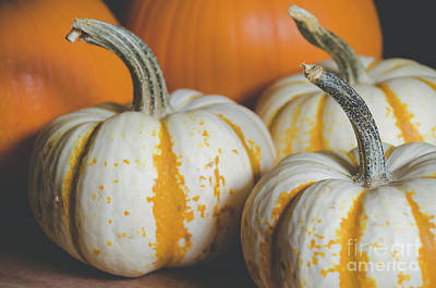 Photograph - Pumpkins 8 by Andrea Anderegg
