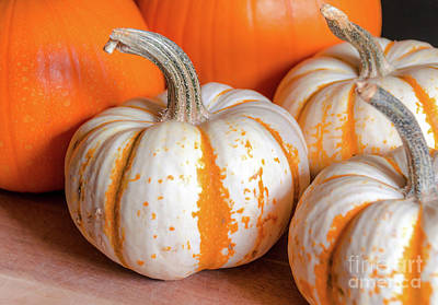 Photograph - Pumpkins 9 by Andrea Anderegg