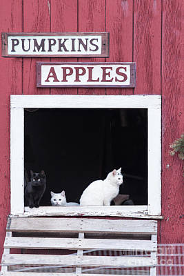 Photograph - Pumpkins And Apples by Nicki McManus