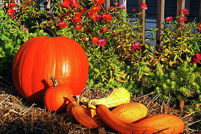 Photograph - Pumpkins And Gourds by James Kirkikis