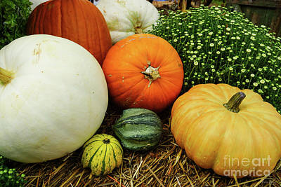Photograph - Pumpkins And Gourds by Jennifer White