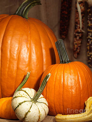 Pumpkins And Gourds Still Life Print by Oleksiy Maksymenko