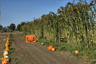 Photograph - Pumpkins And Maze by Michael Gordon