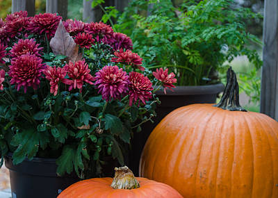 Photograph - Pumpkins And Mums by Stephanie Maatta Smith
