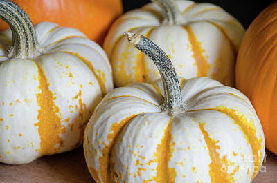 Photograph - Pumpkins by Andrea Anderegg