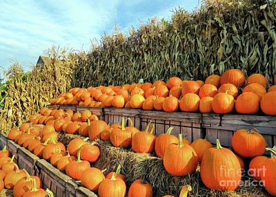 Photograph - Pumpkins At Brookdale Fruit Farm  by Janice Drew