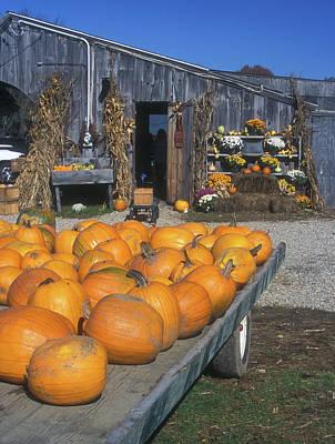Photograph - Pumpkins At Farmstand by John Burk