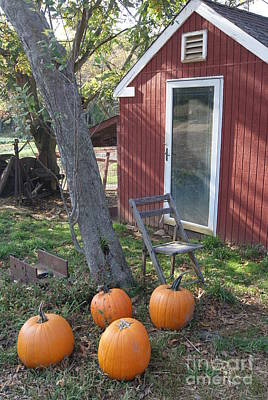 Photograph - Pumpkins At The Hen House by Margie Avellino