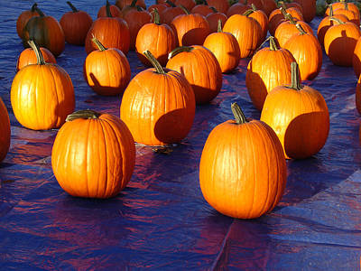 Photograph - Pumpkins Blues Landscape by Steve Karol