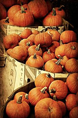 Photograph - Pumpkins For Pies by Diana Angstadt