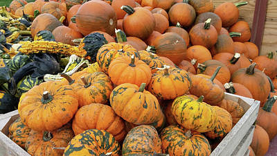 Photograph - Pumpkins For Sale by Liza Eckardt