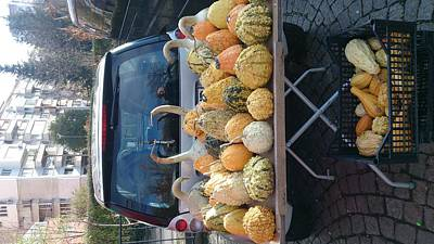 Photograph - Pumpkins  For Sale  by Moshe Harboun