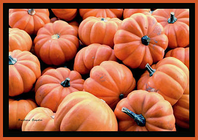 Photograph - Pumpkins From Ventura California by Barbara Snyder