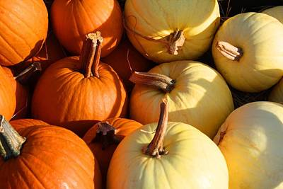 Photograph - Pumpkins Gold And White by Kathryn Meyer