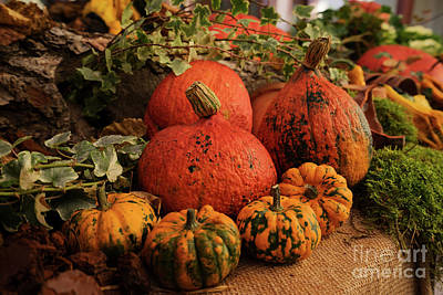 Photograph - Pumpkins Harvest by Anastasy Yarmolovich