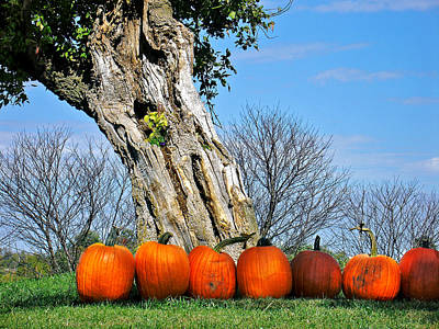 Photograph - Pumpkins In A Row by Steve Karol