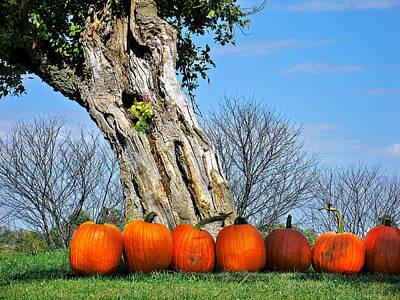 Photograph - Pumpkins In A Row by Steve Karol