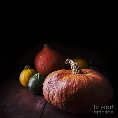 Farm Border Photograph - Pumpkins by Jelena Jovanovic