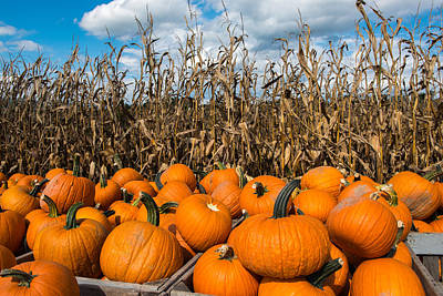 Photograph - Pumpkins by Joye Ardyn Durham