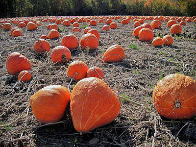 Photograph - Pumpkins Of An Imperfect World by Mary Lee Dereske