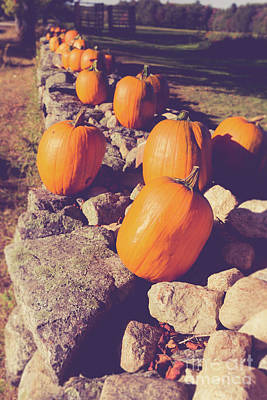 Photograph - Pumpkins On A Stone Wall by Edward Fielding