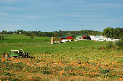 Photograph - Pumpkins On An Ohio Amish Farm by Mountain Dreams