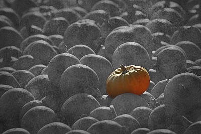 Photograph - Pumpkins Sc2 by Morgan Wright