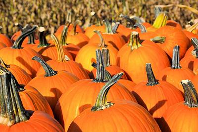 Pop Art Rights Managed Images - Pumpkins Royalty-Free Image by Shelly Dixon