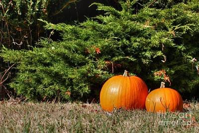 Photograph - Pumpkins by Vicki Spindler