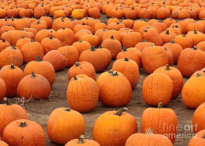 Pumpkins Waiting For Homes Art Print