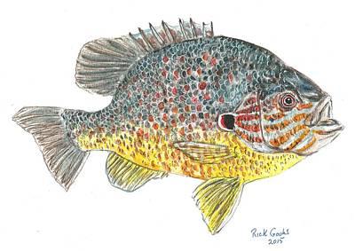 Panfish Painting - Pumpkinseed Sunfish by Richard Goohs
