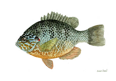 Bluegill Painting - Pumpkinseed Sunfish by Sean Seal